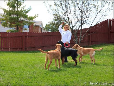 bury pet in backyard dog in backyard 28 images best 25 dog playground ideas