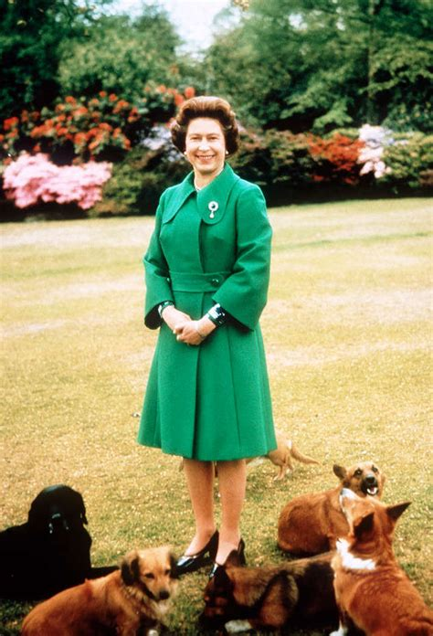 how many corgis does the queen have welsh corgis in decline these photos of queen elizabeth