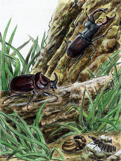 coleottero cervo volante forum entomologi italiani view topic lucciole