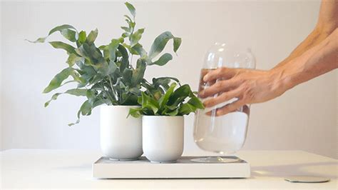 self watering plants tableau pikaplant s self watering system for plants