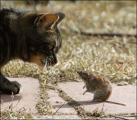 cat and mouse game of cat and mouse blacks out city