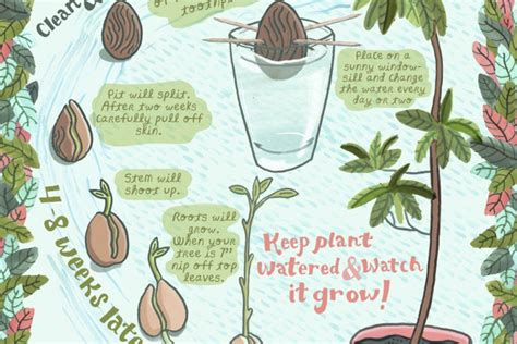 avocado tree from seed fruit learn how to grow an avocado houseplant from an avocado seed