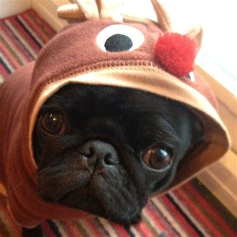 reindeer pug 17 best images about pugs on reindeer pillows and pug