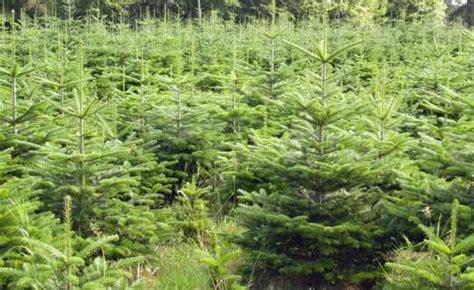 wann wurde strom erfunden wann wurde der weihnachtsbaum erfunden my