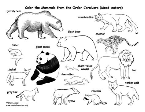herbivorous animals coloring page carnivores coloring pages