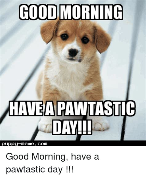 Have A Good Day Meme - 25 best memes about puppy meme puppy memes