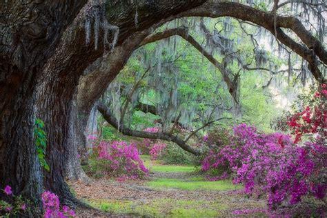 magnolia gardens charleston sc memories of trips we