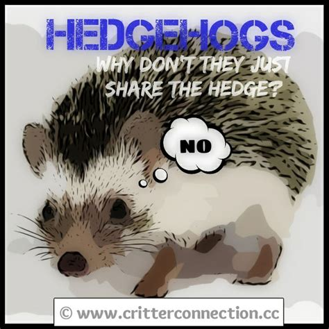Hedgehog Meme - hedgehog hedgie lol funny quills hedgehog