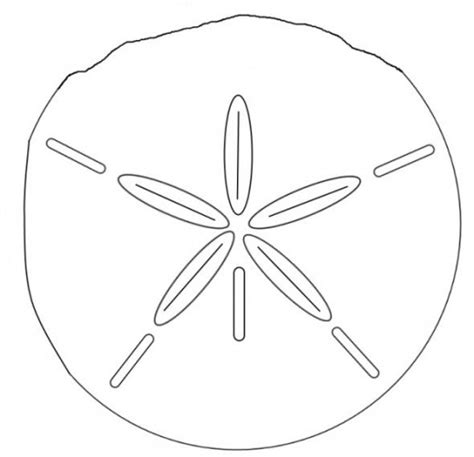coloring page sand dollar sand dollar coloring sheet coloring pages