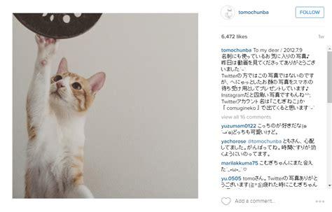 membuat instagram verified 13 kucing lucu yang follower instagram nya lebih banyak