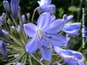 Garden Flowers A Z Flower Guides In Alphabetical Order