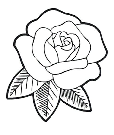 Rose Flower Drawing Images 16 Flower Drawings Jpg Download Drawing Art Ideas Images For Drawing