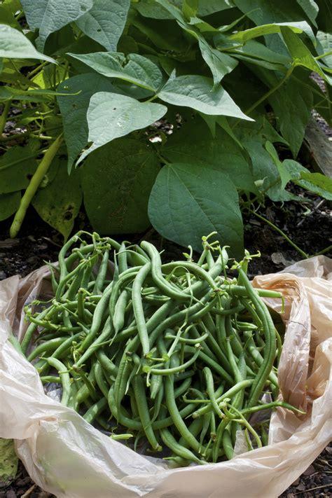 how to grow an autumn vegetable garden install it direct