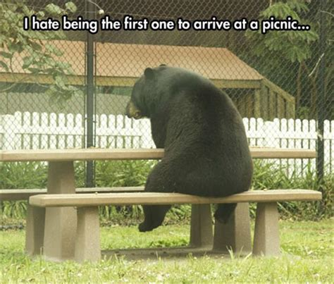 Bear At Picnic Table Meme - animal capshunz picnic funny animal pictures with captions animal memes funny animals