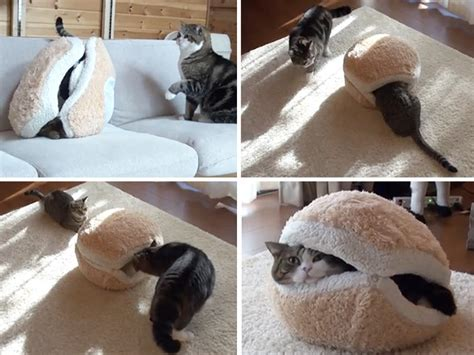 cat hamburger bed welcome to memespp com