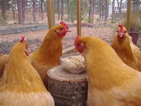 blueridgepetcenter chicken treat chart the best treats