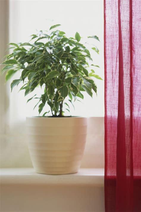 houseplants   survive  light  indoor