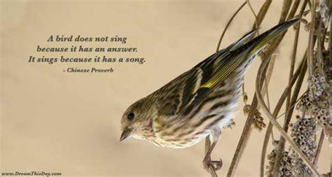bird quotes sad quotes about bird