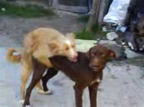 animales follando youtube perros follando youtube