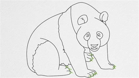 does doodle draw how do you draw a panda step by step pencil drawing