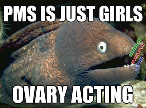 Funny Pms Memes - pin by elizabeth spears on lolcats and various animal