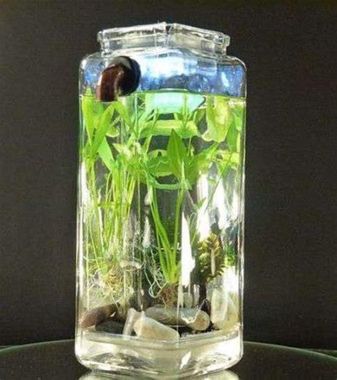 cost effective ways   aquarium  everyday