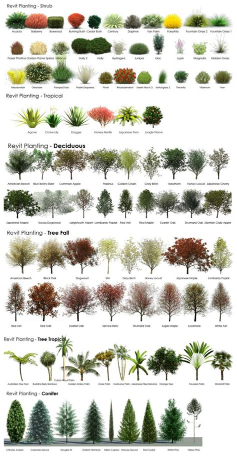 botanical trees tree types 1 landscaping pinterest revit rpc tree guide from a revit user archvision blog