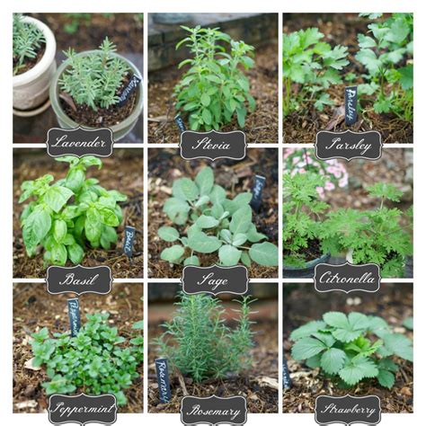 herb garden plants growing herbs from seeds herb gardening help 17 tips for