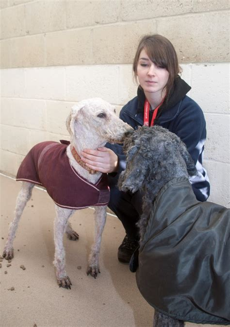 puppy city winchester winchester dozens of offers to rehome abandoned dogs hshire