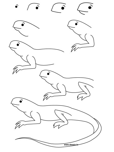 Drawing Step By Step Easy Animals by Easy Animals To Draw Step By Step Pencil Drawing