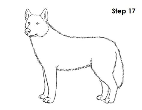 how to a husky husky line drawing www pixshark images galleries with a bite