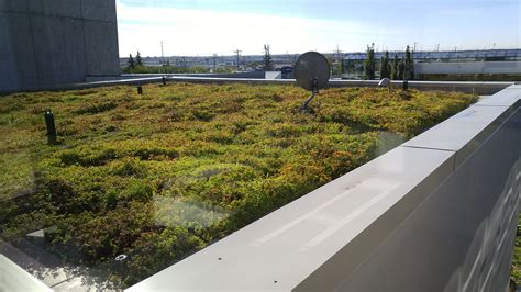 green roof green roofs city of edmonton