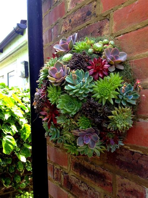 9 Best Images About Hanging Plants For Brick Wall On Wall Hanging Garden