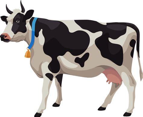 cows clipart vector cows vector transparent
