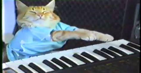 fatso keyboard cat memes