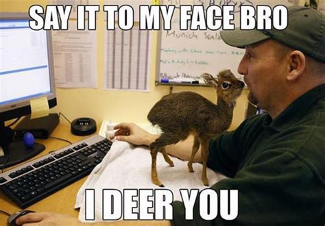 Say That To My Face Meme - say it to my face bro i deer you jpegy what the
