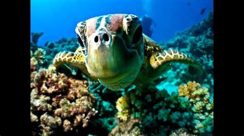 dive maldives maldives diving best spots for maldives diving