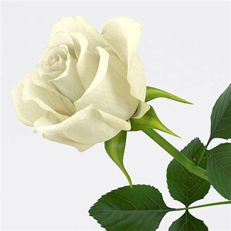 flowermodels com rose flowers 3d model