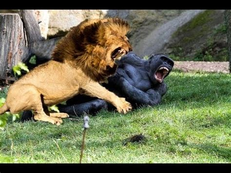 real fights top 10 animal fight real fight store souq