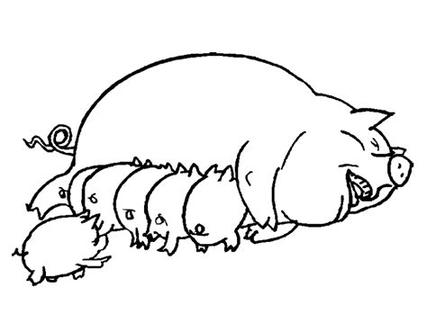 fat pig coloring page outline of a pig az coloring pages
