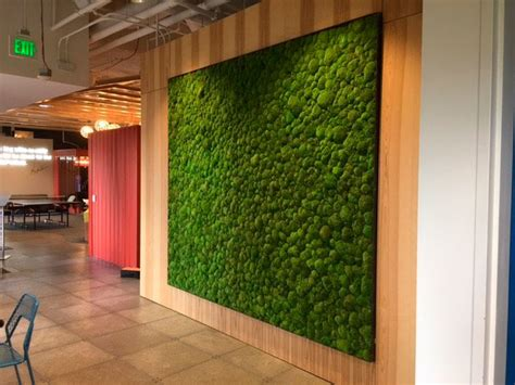 vertical garden preserved plants for interior walls