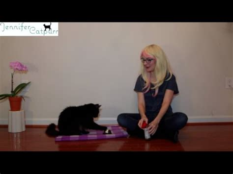 how to your to ring a bell my cat pecan the nut rings bell for treats pavlov s funnycat tv