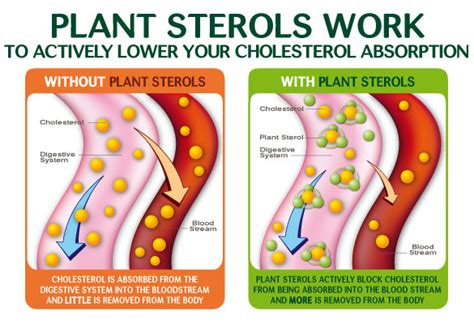 plant sterols lower blood cholesterol levels make lifestyle changes to prevent heart disease www