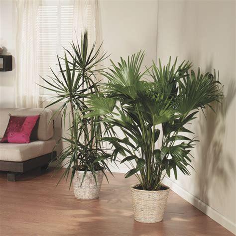 house plants no light care for houseplants