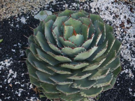 plants for conditions drought tolerant plants