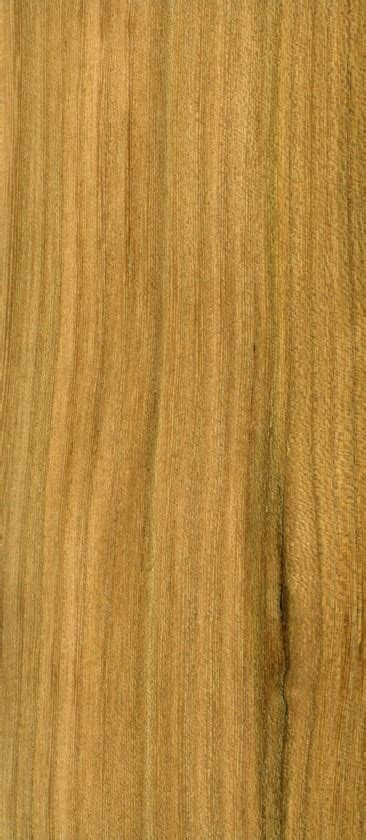 European Elm Timber Specification Sykes Timber