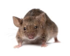 rodents friend foe and laboratory subject demeliou