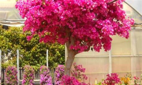 piante da vaso perenni fiori perenni stratfordseattle