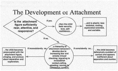 attachment theory in building connections between children and bowlby attachment theory studiousguy