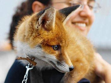 wild animals   domesticated  pets wow amazing